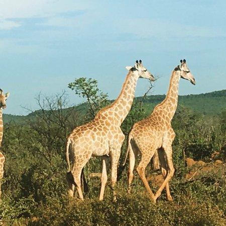 Rhulani Safari Lodge: photo4.jpg