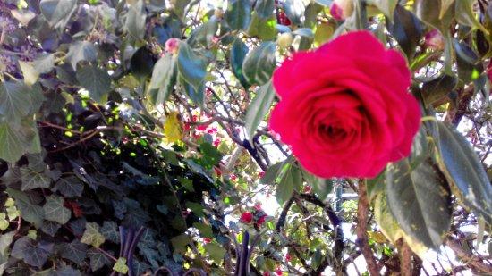 Champsac, فرنسا: Spring flowers