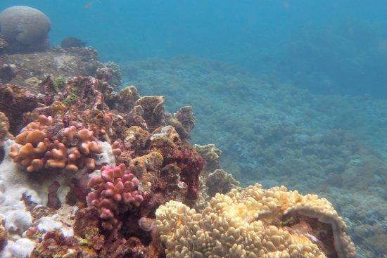 Bunaken Cha Cha Nature Resort Photo