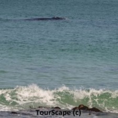 St. James, Zuid-Afrika: The Southern Right Whale Tour of Cape Town's Stormy Seas