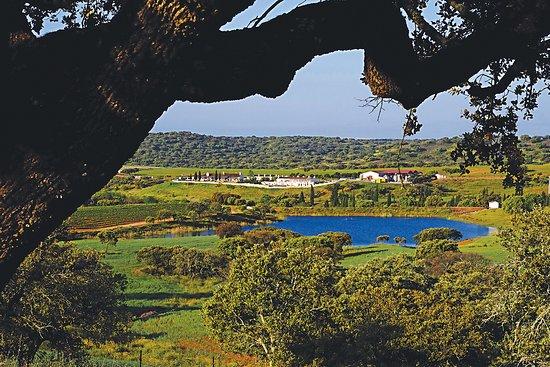 Vidigueira, Portugal: Herdade do Sobroso