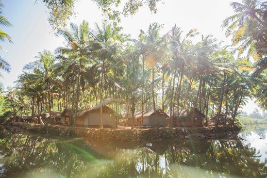 Palm Trees Ayurveda Heritage
