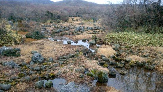 Hallasan National Park: Marsh land