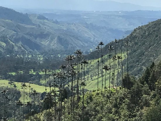 Bosques de Cocora: photo2.jpg