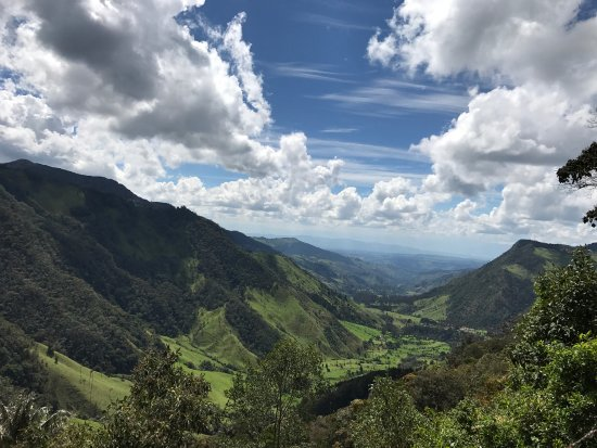 Bosques de Cocora: photo3.jpg