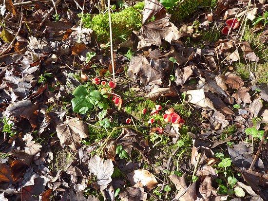 Wimborne Minster, UK: Woodland Fungi