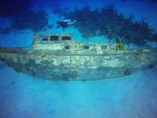 Sharky Dive Shop: photo6.jpg
