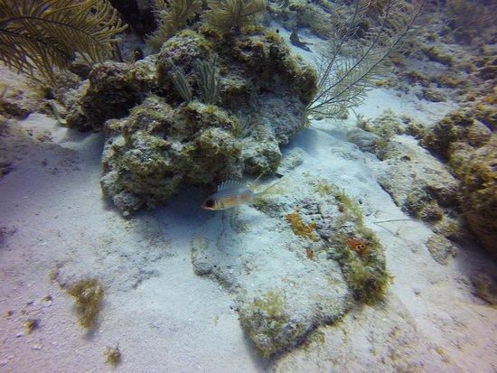 Sharky Dive Shop: photo7.jpg
