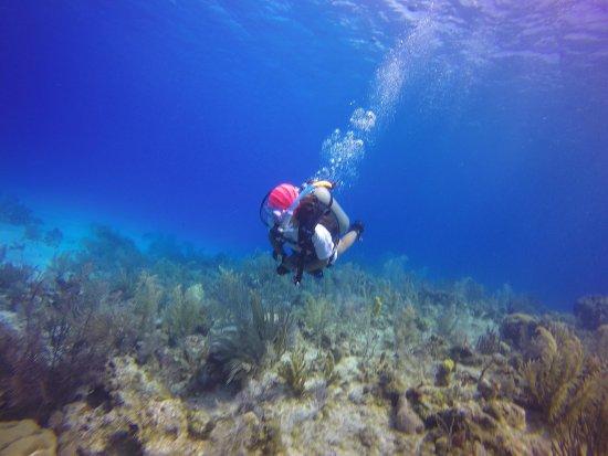 Sharky Dive Shop: photo8.jpg