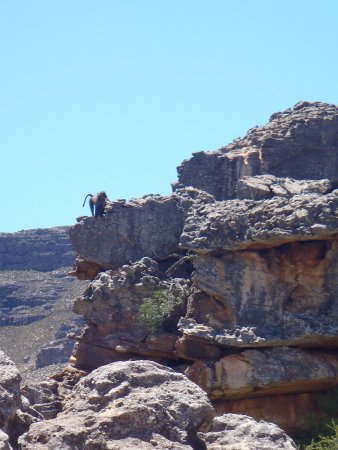 Clanwilliam, South Africa: baboons