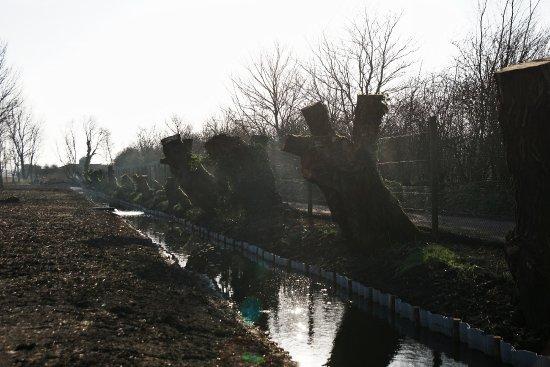 Burscough, UK: Decimated trees.....