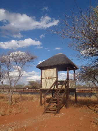 Lephalale, South Africa: game viewing platform