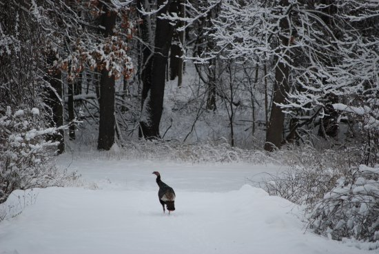 Augusta, MI: Wildlife can be see from the Sanctuary's Lake Loop trail.