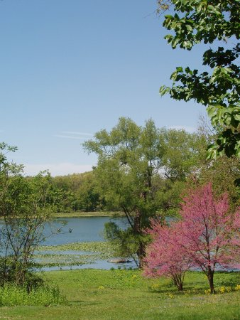 Augusta, MI: Spring is a wonderful time to visit the Sanctuary, while the redbud trees are in bloom.