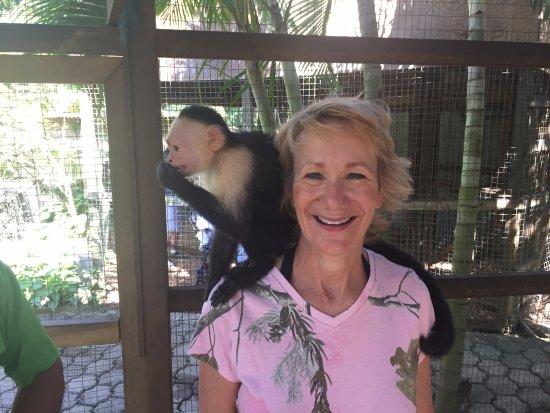 Sandy Bay, Honduras: Fun soft monkeys