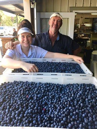 Whakatane, Selandia Baru: A good load of Blueberries