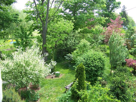 Trumansburg, NY: Back garden view on a lovely June day.