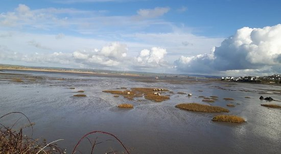 Appledore, UK: The estuary with many wading birds as well as sheep!