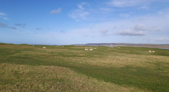 Appledore, UK: Lots of green space with the sea in the background
