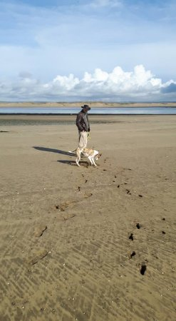 Appledore, UK: The vast space on the beach - great for kids or dogs! as well as adults