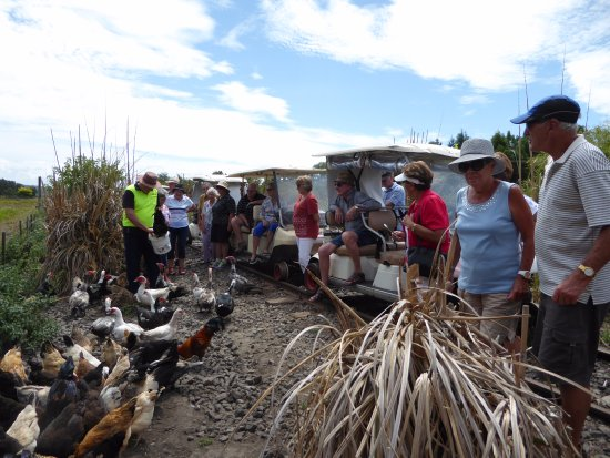 Whakatane, Nova Zelândia: Feeding the chooks and ducks