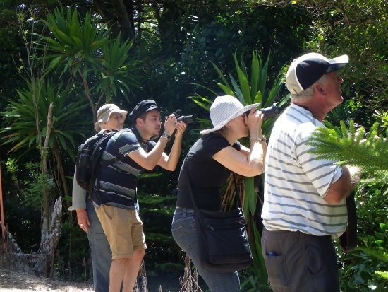 Isla Norfolk, Australia: Margaret Christian (at the back left) helps everyone find a bird.