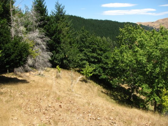 Ngatapa, New Zealand: Views in Eastwoodhill Arboretum