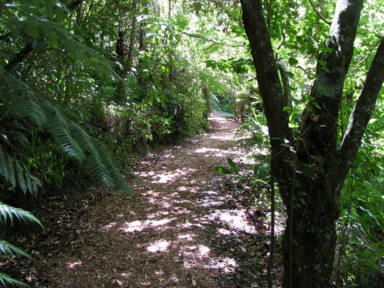 Ngatapa, New Zealand: Walkway in Eastwoodhill Arboretum