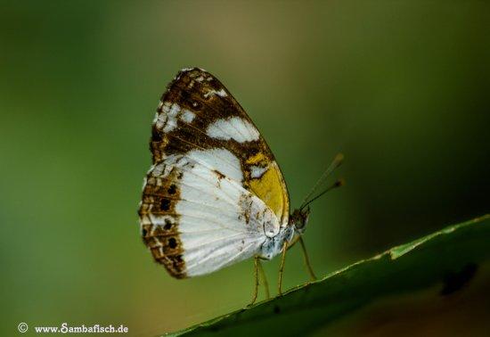 Santa Marta District, Colombia: In der Umgebung der Finca gibts viel zu entdecken