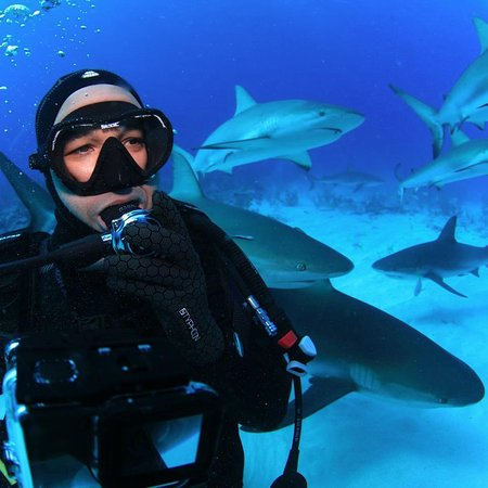 Île de New Providence : Me and some sharks!