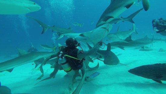 Île de New Providence : Shark feed