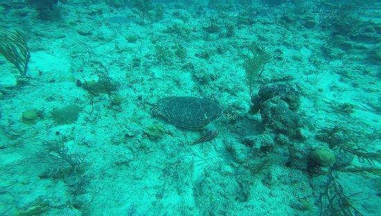 Île de New Providence : Turtle