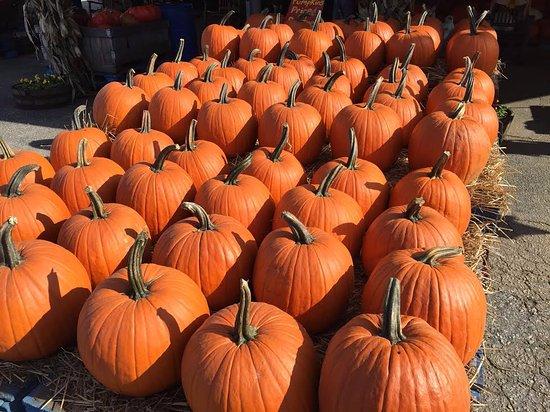 Gaffney, SC: Get your pumpkins here mid-Sept through October