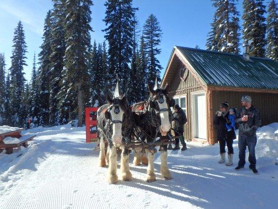 Биг-Уайт, Канада: Sleigh Rides