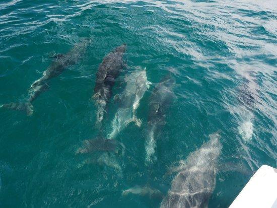 Paihia, Nya Zeeland: photo4.jpg