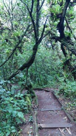 Mombacho Volcano: Bosque humedo