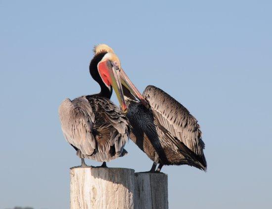 Sausalito, Kalifornien: Beautiful wildlife on the Bay.