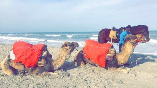 SENTIDO Djerba Beach: photo3.jpg