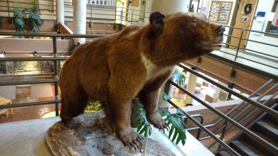 Logan, UT: O urso