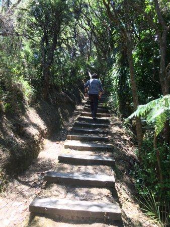 Gisborne, Nueva Zelanda: Shady steps up the East Cape Lighthouse