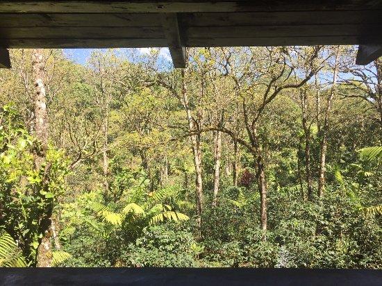 Alta Verapaz Department, Guatemala: Vista desde las habitaciones