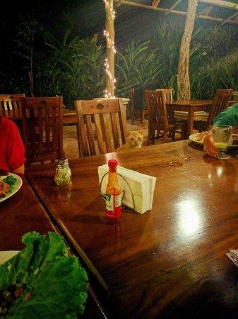 DoceLunas Hotel, Restaurant & Spa: Hamilton the Cat is a gracious dinner host <3
