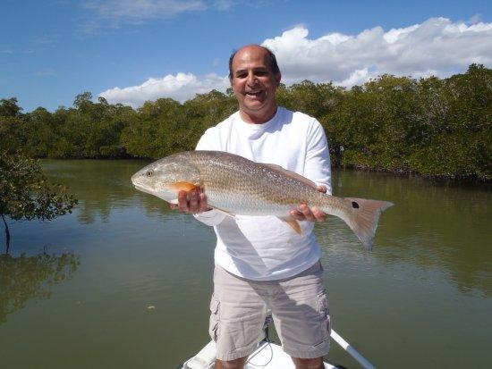 Goodland, ฟลอริด้า: Big redfish caught on Jig tipped with shrimp