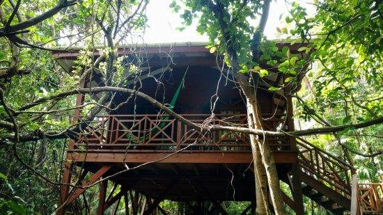 Hamanasi Adventure and Dive Resort: Treehouse 16!