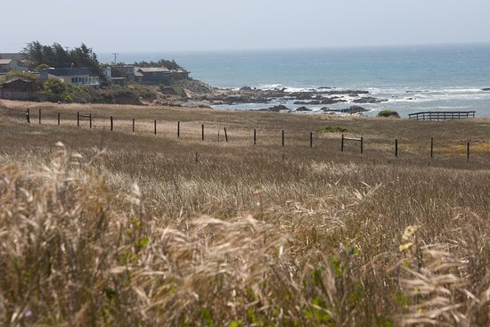 Fiscalini Ranch Preserve : View from one of many easy walking trials