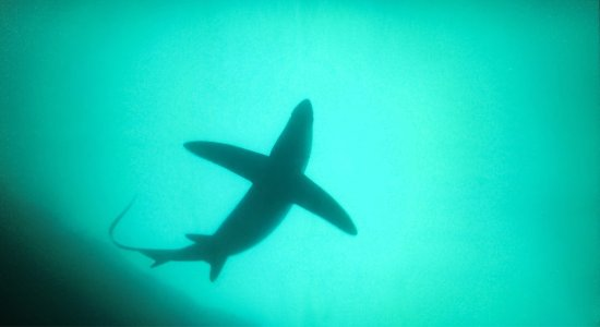 Malapascua Island, Filippinerna: photo4.jpg