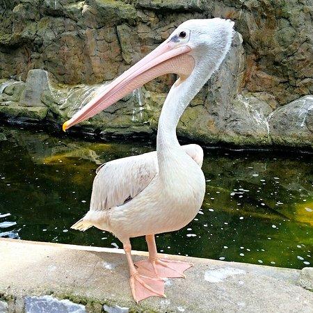 Kuala Lumpur Bird Park: KL Bird Park