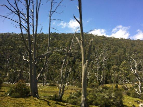 Cradle Mountain-Lake St. Clair National Park, Australia: photo2.jpg