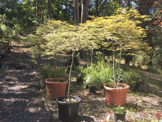 Yatte Yattah, Australia: Beautiful plants as you stroll through the nursery.