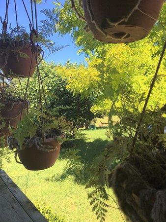 Yatte Yattah, Australia: Lush plants at the nursery.